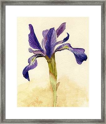 Iris Framed Print by Barbie Corbett-Newmin