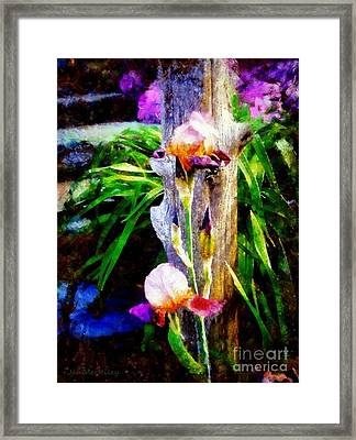 Iris Bloom Framed Print by Janine Riley