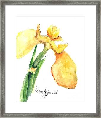 Iris Blooms  Framed Print by Sherry Harradence