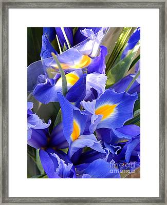Iris Blues In New Orleans Louisiana Framed Print