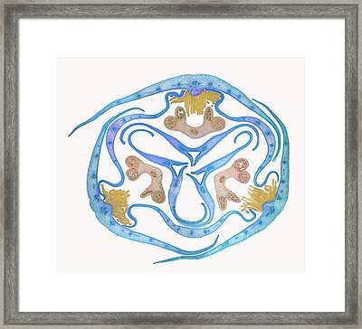 Iris Bud Framed Print by Steve Lowry