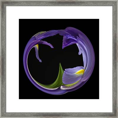 Iris Circled Framed Print by Cyndy Doty