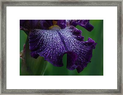 Iris Closeup Framed Print by Ken Dietz