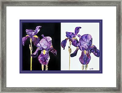 Iris Contrasted Framed Print by Karen Ann