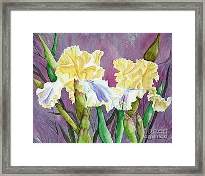 Iris Cream Duo Framed Print by Kathryn Duncan
