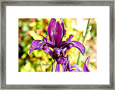 Iris Framed Print by Debbie Sikes