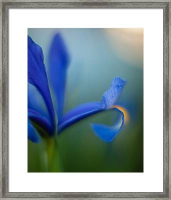 Iris Edge Framed Print by Mike Reid