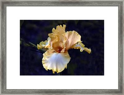 Iris Framed Print by Elaine Walsh