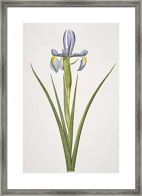 Iris Flower, 20th Century Framed Print