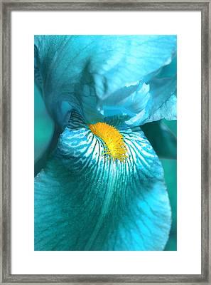 Iris Flower In Turquoise  Framed Print