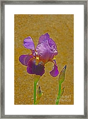 Iris Flower Framed Print by Nur Roy