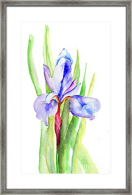 Iris Flowers Framed Print