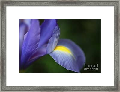 Iris Frozen In Time Framed Print by Inspired Nature Photography Fine Art Photography