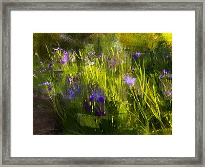 Framed Print featuring the photograph Iris Garden  by Linde Townsend