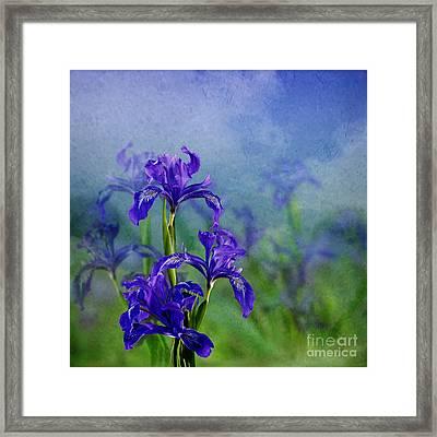 Iris Garden Framed Print by Shirley Mangini