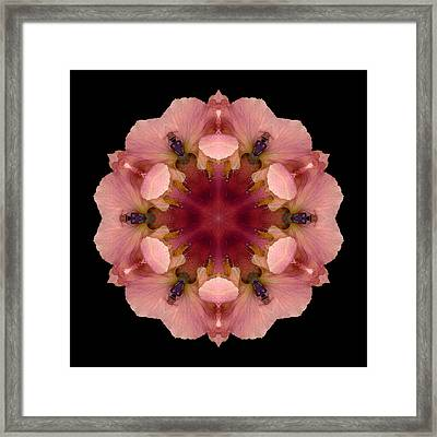 Framed Print featuring the photograph Iris Germanica Flower Mandala by David J Bookbinder
