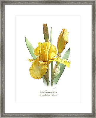 Iris Germanica Gold Galore Framed Print