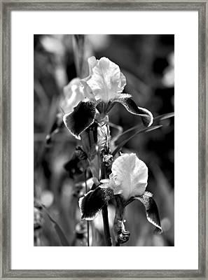 Iris In Black And White Framed Print by Karon Melillo DeVega