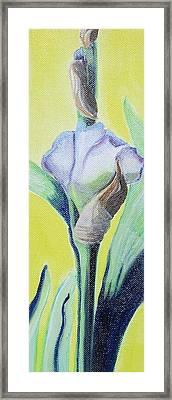Iris In Bloom Framed Print by Melissa Torres