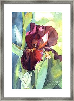 Iris In Red And Burgundy Framed Print by Greta Corens