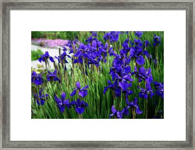 Framed Print featuring the photograph Iris In The Field by Kay Novy