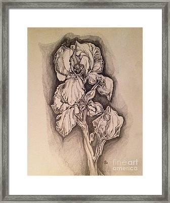 Framed Print featuring the drawing Iris by Iya Carson