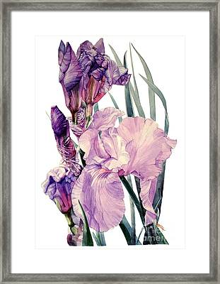 Watercolor Of An Elegant Tall Bearded Iris In Pink And Purple I Call Iris Joan Sutherland Framed Print