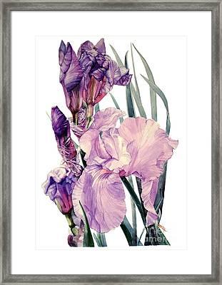 Iris Joan Sutherland Framed Print by Greta Corens