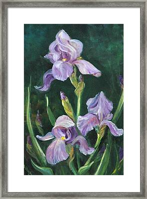 Iris Framed Print by Jolyn Kuhn