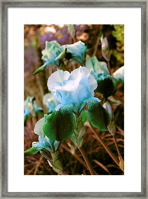 Iris  Framed Print by Jon Baldwin  Art