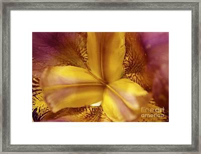 Iris Kaleidoscope I Framed Print