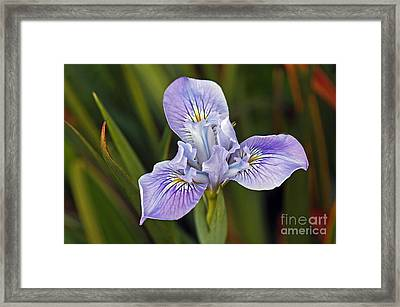 Framed Print featuring the photograph Iris by Kate Brown
