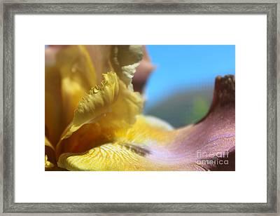 Iris Landscape Framed Print