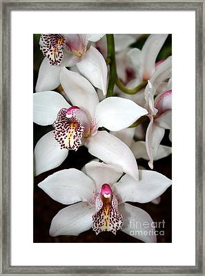 Floral Curiosity  Framed Print by Laura Paine