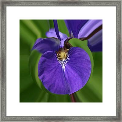 Iris Leaf Framed Print