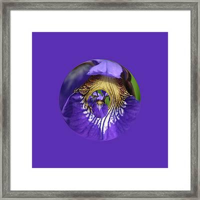 Iris Leaf Loop Framed Print