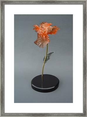 Iris Framed Print by Leslie Dycke