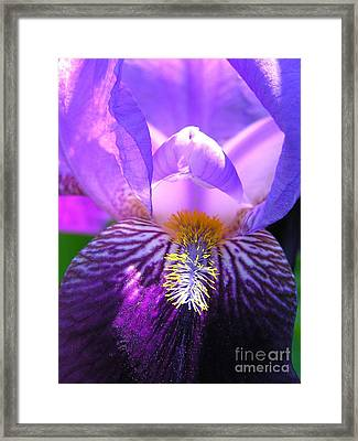 Iris Light Framed Print