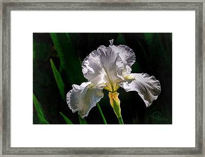 Iris Framed Print by Ludwig Keck
