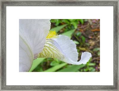 Iris Macro 2 Framed Print by Claudia Goodell