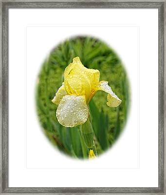 Framed Print featuring the photograph Iris Madi Moonlight by Paul Gulliver