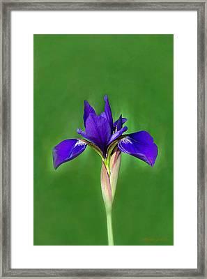 Iris Framed Print by Marion Johnson