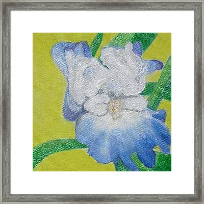 Iris Framed Print by Melissa Torres