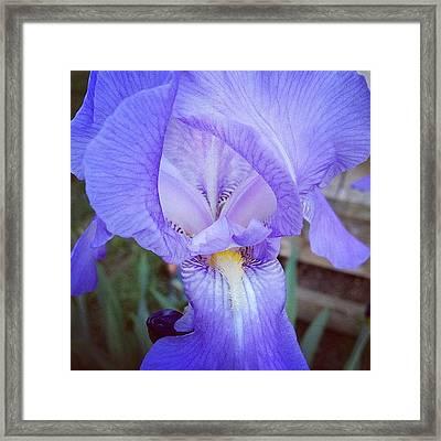 #iris Framed Print