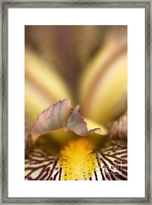Iris Mouth Framed Print by Joy Watson