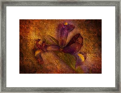 Framed Print featuring the photograph Iris Number Eight by Bob Coates
