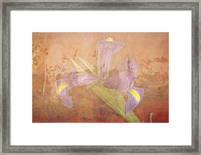 Framed Print featuring the photograph Iris Number Four by Bob Coates
