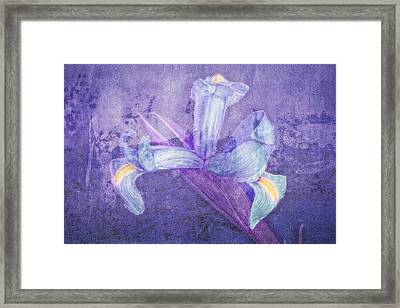 Framed Print featuring the photograph Iris Number Seven by Bob Coates