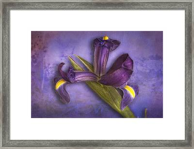 Framed Print featuring the photograph Iris Number Six by Bob Coates