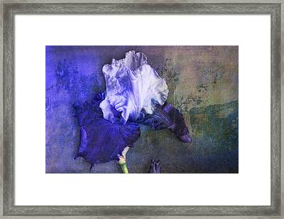 Framed Print featuring the photograph Iris Number Three by Bob Coates